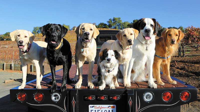 Dogs on a flatbed pickup